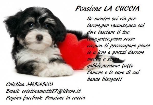 Animali With Pet Sitter Annunci.